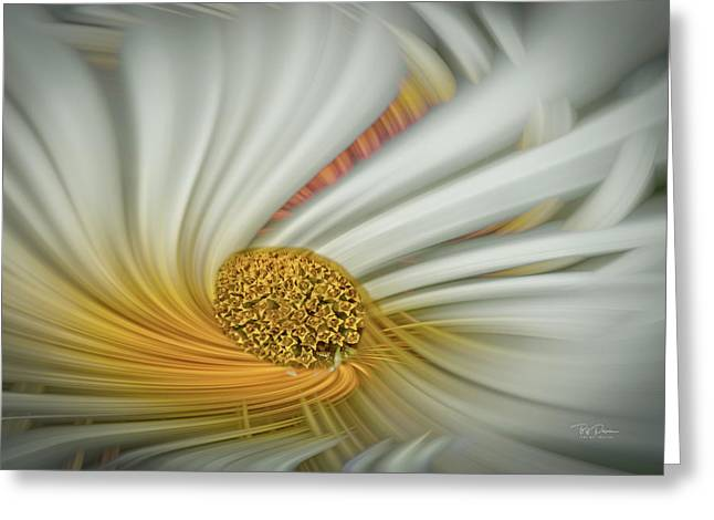 Daisy Swirl Greeting Card