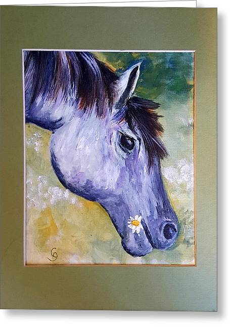 Daisy The Old Mare     52 Greeting Card