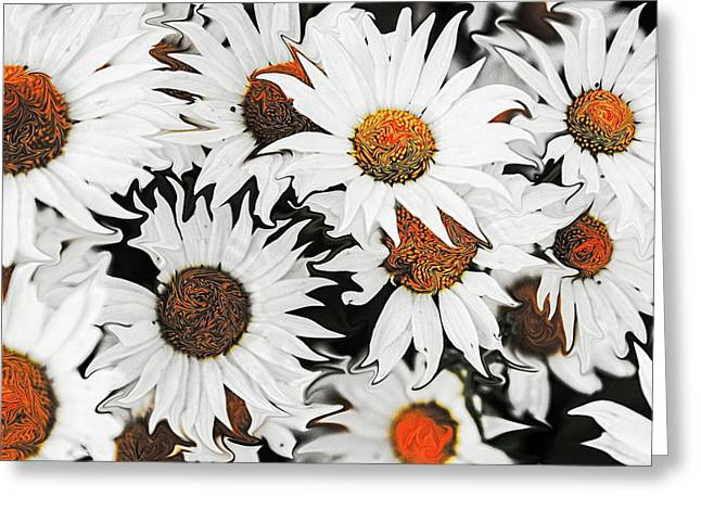 Daisy With A Twist Greeting Card