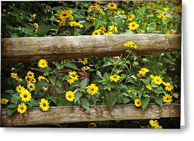 Daisy's Fence Greeting Card