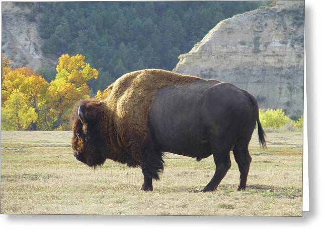 Dakota Badlands Majesty Greeting Card