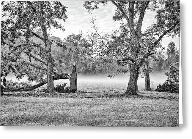 Dale - Foggy Morning Greeting Card