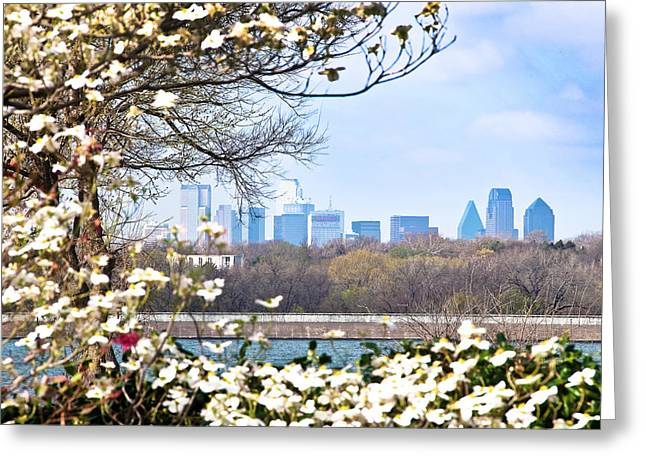 Dallas Through The Dogwood Flowers Greeting Card by Tamyra Ayles