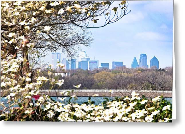 Tamyra Ayles Greeting Cards - Dallas Through The Dogwood Flowers Greeting Card by Tamyra Ayles