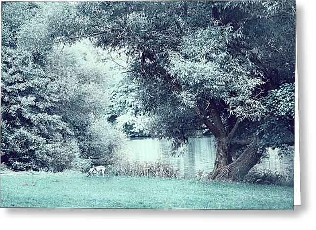 Dalmatian In Blue Woods Greeting Card