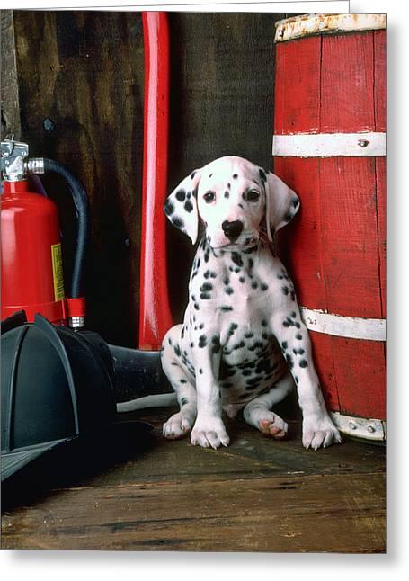 Dalmatian Puppy With Fireman's Helmet  Greeting Card