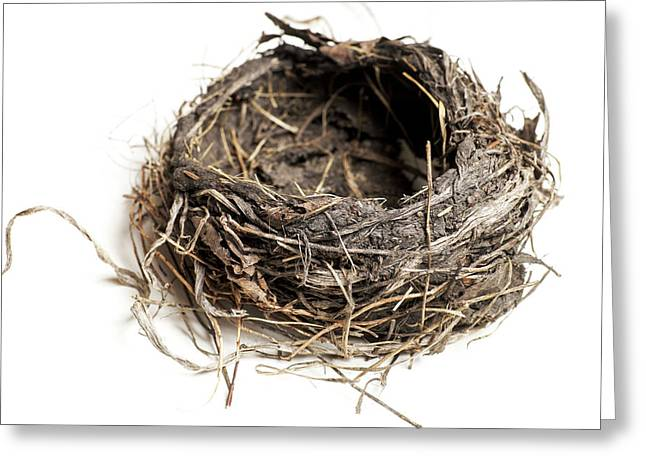 Damaged Birds Nest Isolated On White Greeting Card