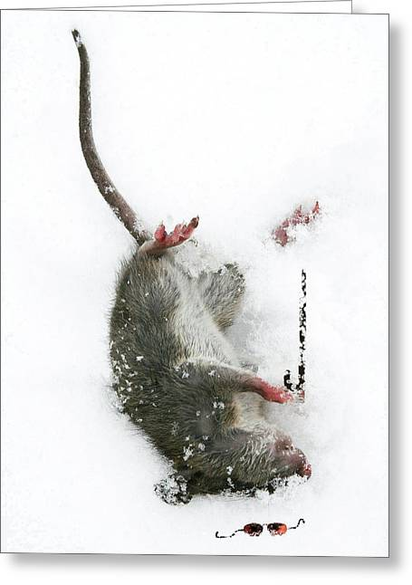 Mouse Digital Greeting Cards - Damn Greeting Card by Jan Piller