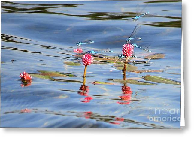 Damselflies On Smartweed Greeting Card