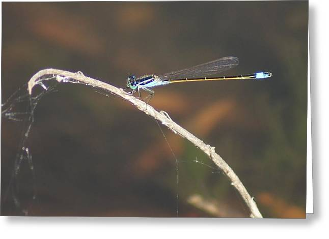 Greeting Card featuring the photograph Damselfly by Lynda Dawson-Youngclaus
