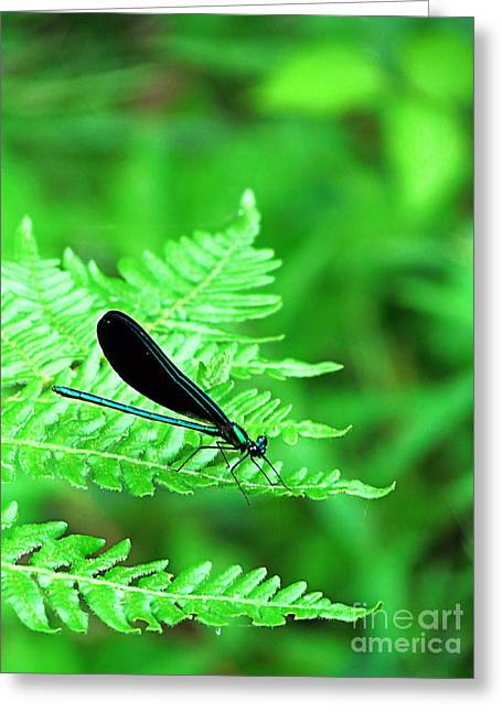 Damselfly On Fern Greeting Card