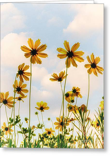 Dance Of The Coreopsis Greeting Card by Tamyra Ayles