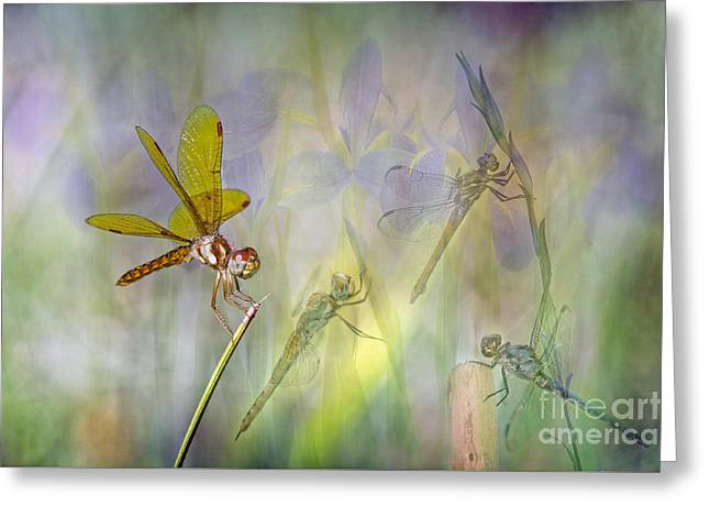 Dance Of The Dragonflies Greeting Card by Bonnie Barry