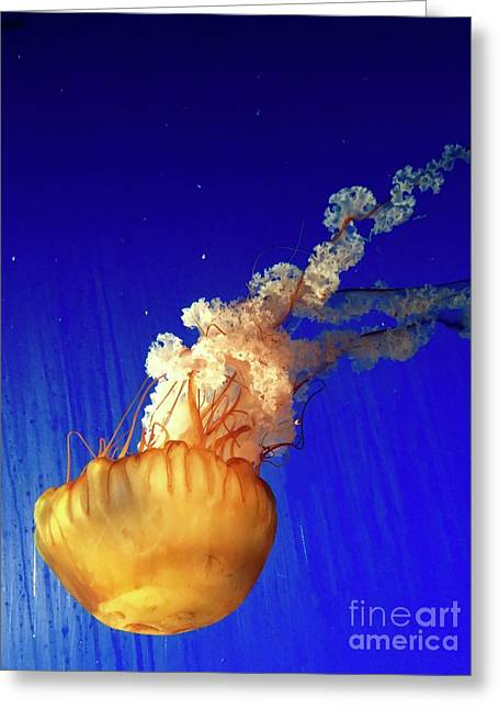 Dance Of The Jelly Greeting Card