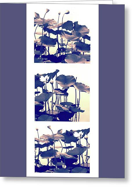 Dance Of The Lotus Triptych II Greeting Card