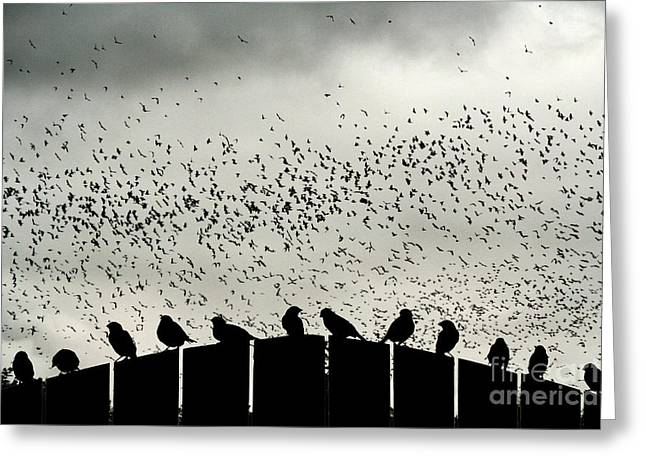 Greeting Card featuring the photograph Dance Of The Migration by Jan Piller