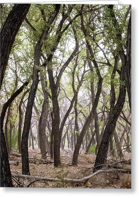 Dance Of The Trees Greeting Card