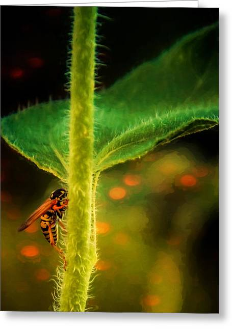 Dance Of The Wasp Greeting Card