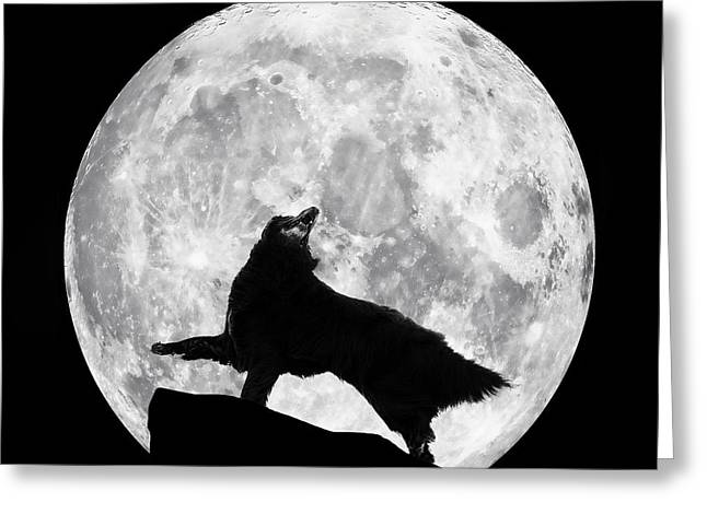 Dances With The Moon Greeting Card by Wolf Shadow  Photography