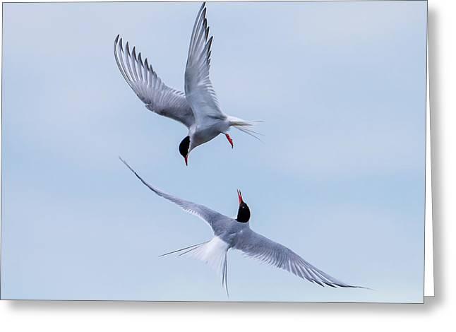 Dancing Arctic Terns Greeting Card