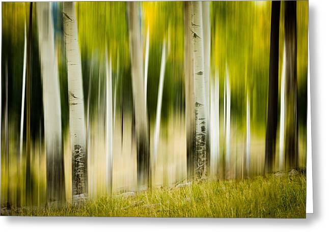 Dancing Aspens Greeting Card
