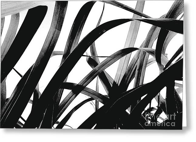 Greeting Card featuring the photograph Dancing Bamboo Black And White by Rebecca Harman