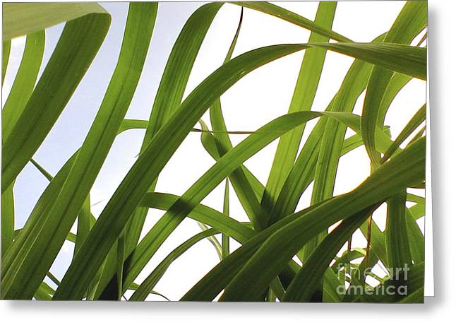 Greeting Card featuring the photograph Dancing Bamboo by Rebecca Harman