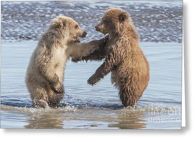 Dancing Bears Greeting Card by Chris Scroggins