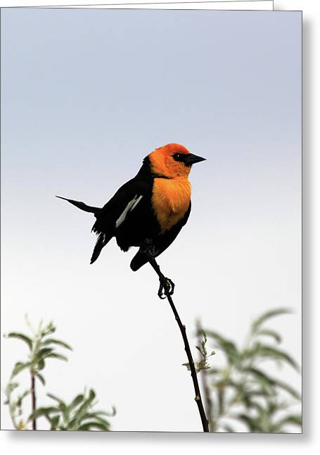 Dancing Blackbird Greeting Card