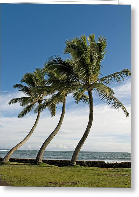 Dancing Coconut Tree Greeting Card