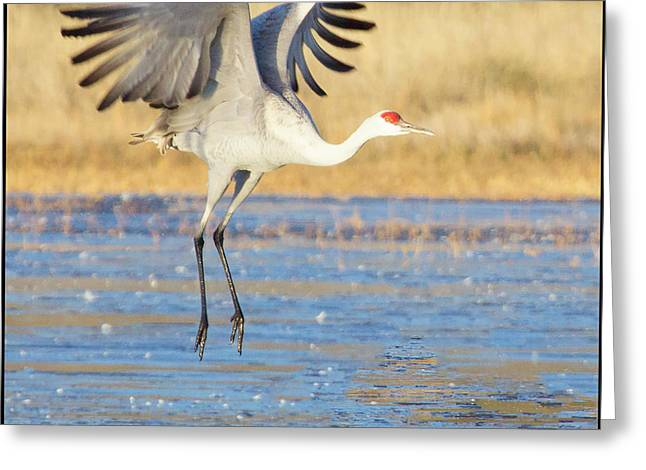 Dancing Crane Greeting Card