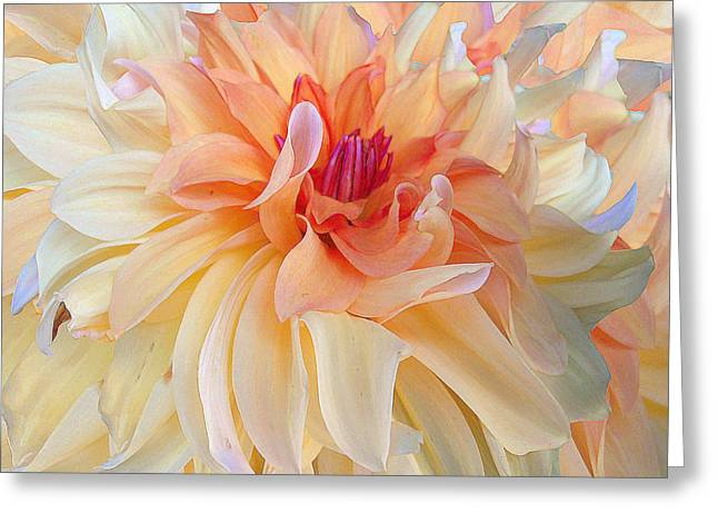 Dancing Dahlia Greeting Card