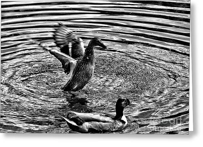 Dancing Ducks On The Gipping Greeting Card by Mike Chen