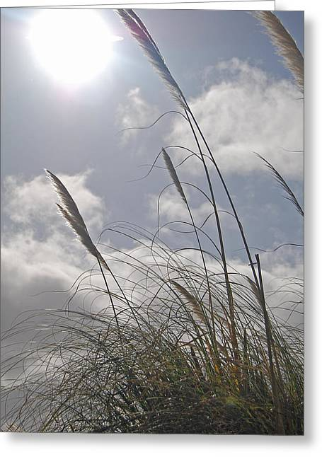 Dancing Grass Greeting Card by Jean Booth