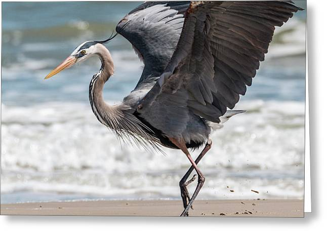 Dancing Heron #2/3 Greeting Card