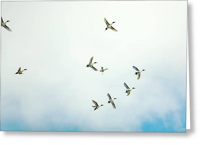 Dancing In The Air Greeting Card by Todd Klassy