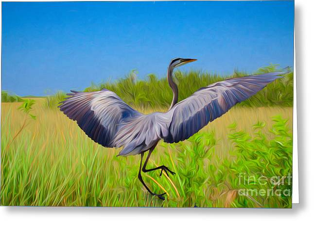 Dancing In The Glades Greeting Card