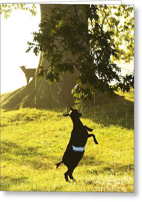 Dancing In The Rain Greeting Card by Thomas R Fletcher