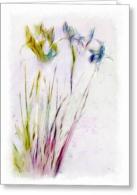 Dancing Irises Greeting Card by Jill Balsam