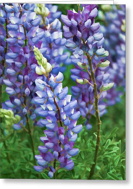 Greeting Card featuring the photograph Dancing Lupines - Spring In Central California by Ram Vasudev