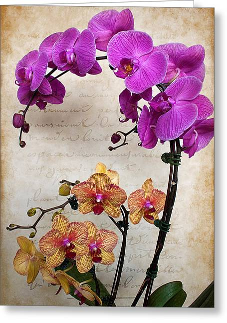 Dancing Orchids Greeting Card
