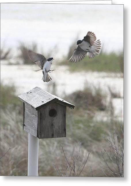 Dancing Tree Swallows Greeting Card