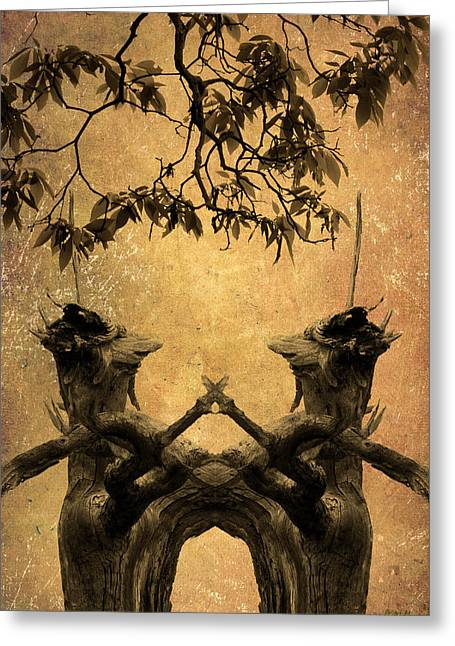 Dancing Trees Greeting Card by Dave Gordon