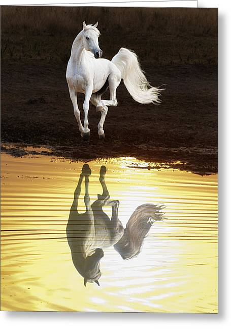 Dancing With Myself Greeting Card by Ron  McGinnis