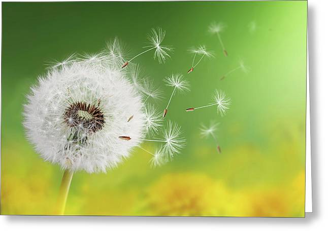 Greeting Card featuring the photograph Dandelion Clock In Morning by Bess Hamiti