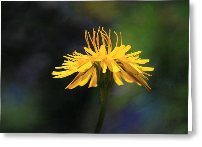 Dandelion Dance Greeting Card