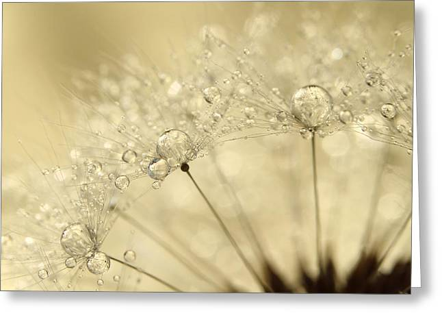 Dandelion Drops Greeting Card by Sharon Johnstone