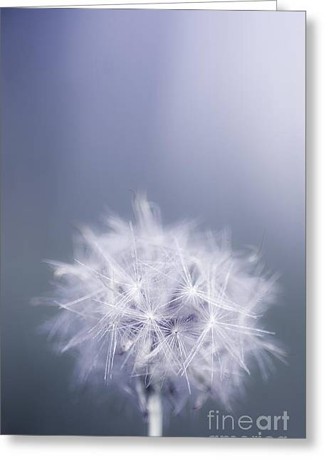 Dandelion Flower In Cold Blue Field. Winter Wish Greeting Card by Jorgo Photography - Wall Art Gallery