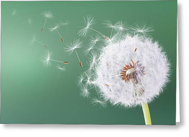 Dandelion Flying On Green Background Greeting Card