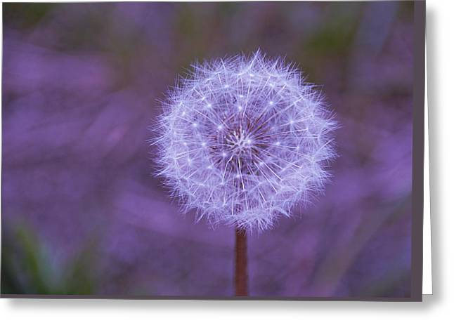 Greeting Card featuring the photograph Dandelion Geometry by SimplyCMB